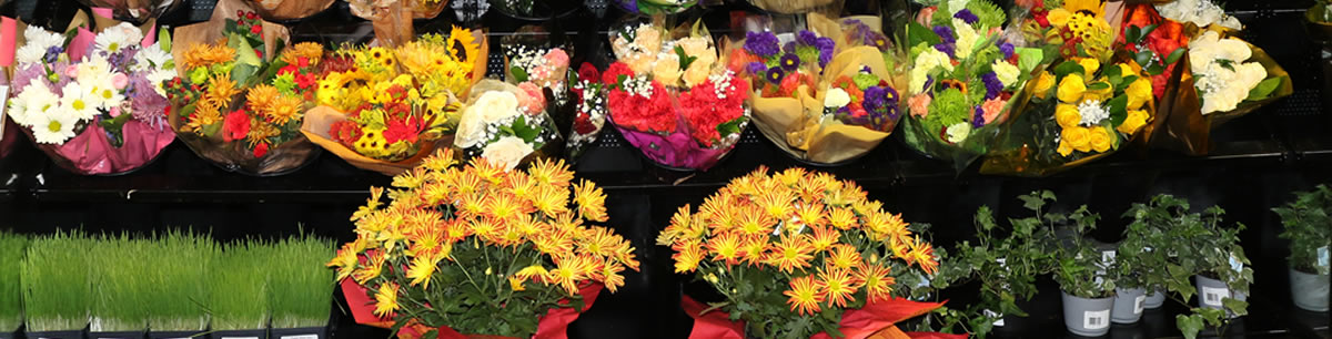 Freshly Cut Flowers and Potted Plants at Hollywood Markets